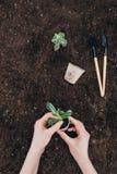 Ręki trzyma zielonej rośliny i kwiatu garnka above ziemię z ogrodnictw narzędziami Zdjęcie Royalty Free