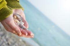 Ręki trzymają seashells na dennym tle Fotografia Stock