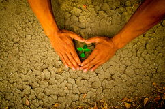 Ręki tworzy kierowego kształt wokoło drzewnego dorośnięcia na krakingowej ziemi Fotografia Stock