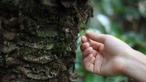 Ręki wzruszający drzewo obrazy stock