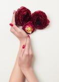Ręki z czerwonymi manicure'u i czerwieni kwiatami fotografia royalty free