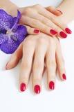 Ręki z menchii manicure'em i purpur orchideą Zdjęcie Stock
