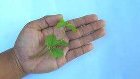 Ręki zapewniają rośliny dla lepszy naturalnego życia obraz stock