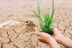 Ręki zielonej trawy broniąca flanca Fotografia Stock