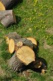 Rżnięci drzewa Zdjęcia Royalty Free