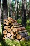rżnięci lasowi drzewa drewniani Obraz Stock