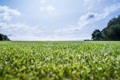 Rżnięta trawa blisko oceanu Obraz Royalty Free