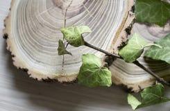 Rżnięte gałąź bluszcz i drzewa Elegancka dekoracja Obrazy Stock