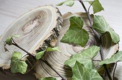 Rżnięte gałąź bluszcz i drzewa Elegancka dekoracja Obrazy Royalty Free