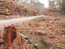 Rżnięte sosen bele brogować up dla transportu w lesie Obrazy Royalty Free