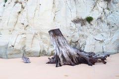 Rżnięty bagażnik i korzenie drzewa przy Piaskowatą plażą przeciw tłu wapień skała abstrakt - resztki powodować tsunami szkoda - obrazy stock