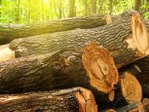 rżnięty dębowy drzewo Zdjęcia Stock