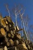 rżnięty drewno Obrazy Royalty Free