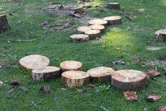 Rżnięty drewno w lasach Zdjęcia Royalty Free
