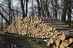 Rżnięty drewno w lesie Obrazy Royalty Free