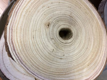 Rżnięty drewno z dziur teksturami Obrazy Royalty Free