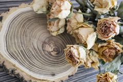 Rżnięty drewno z wysuszonymi różami; suche róże na rżniętym drzewie Zdjęcia Royalty Free