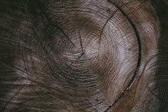 Rżnięty drzewnego bagażnika tło i tekstura Drewniana tekstura rżnięty drzewny bagażnik Zbliżenie widok stara drewniana tekstura A Zdjęcie Royalty Free