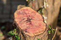 Rżnięty Drzewny bagażnik obraz stock