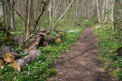 Rżnięty drzewny bagażnik footpath zdjęcia royalty free