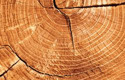 rżnięty drzewo obraz royalty free