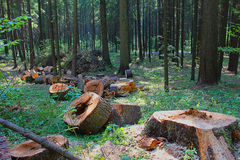 rżnięty drzewo Obrazy Stock