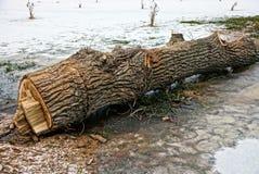 Rżnięty drzewo na lodowym jeziorze Zdjęcia Stock