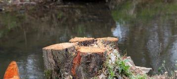 Rżnięty drzewo w lasowej, bardzo płytkiej głębii pole, Zdjęcie Stock