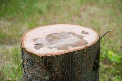 rżnięty gęsty drzewny bagażnik Drewniana tekstura obraz royalty free