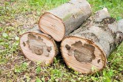 rżnięty gęsty drzewny bagażnik Drewniana tekstura obrazy royalty free