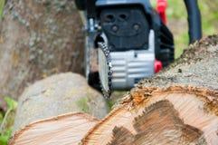 Rżnięty gęsty drzewny bagażnik Drewniana tekstura Piła łańcuchowa ciie drewno obrazy stock