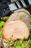 rżnięty gęsty drzewny bagażnik Drewniana tekstura Piła łańcuchowa ciie drewno zdjęcia royalty free