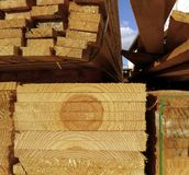 Rżnięty i pokrojony drzewo przemysł ten wylesienia lasy fotografia royalty free