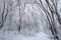 rżnięty Illinois parka skały stan Fotografia Royalty Free