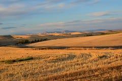 Rżnięty pszeniczny pole odbija w późnego popołudnia słońcu Obrazy Stock