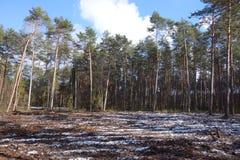 Rżnięty teren w lesie Obraz Stock