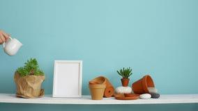r Étagère blanche contre le mur en pastel de turquoise avec la poterie et l'usine succulente Main