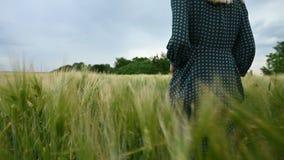 r Ένα νέο ξανθό κορίτσι ήρεμους περιπάτους στους χαλαρούς πράσινους φορεμάτων κατά μήκος ενός πράσινου τομέα του σίτου r φιλμ μικρού μήκους