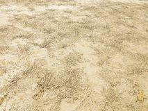 r Ίχνη ζωής των μικρών καβουριών που ζουν στην ακτή στοκ φωτογραφία με δικαίωμα ελεύθερης χρήσης