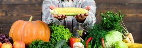 r Λαβή της Farmer corncob ή ξύλινο υπόβαθρο αραβόσιτου Farmer που παρουσιάζει τα οργανικά homegrown λαχανικά στοκ φωτογραφία με δικαίωμα ελεύθερης χρήσης