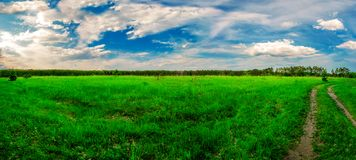 r Τομέας, δάσος και ουρανός r Πράσινη juicy χλόη Κωνοφόρο δάσος στον ορίζοντα Σωρείτης στον ουρανό στοκ εικόνα με δικαίωμα ελεύθερης χρήσης