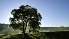 r Лиственное дерево внутри освещает контржурным светом акции видеоматериалы