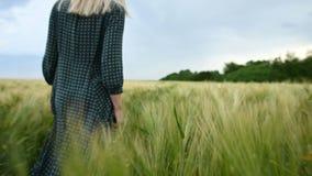 r Молодая белокурая девушка в свободном зеленом платье неторопливом идет вдоль зеленого поля пшеницы r видеоматериал