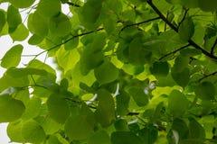 r 与绿色叶子的背景 库存照片