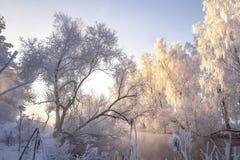 r 冷淡的树 风景冬天清楚的早晨 弗罗斯特自然 在树的树冰在河沿 免版税库存图片