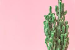 r 在桃红色淡色背景的最小的创造性的stillife 免版税库存照片