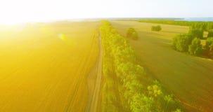 r 在绿色和黄色麦子农村领域和林木线的低飞行 股票视频