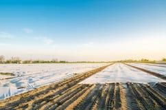 r 增长的有机蔬菜自小温室 水滴灌溉 防止的Spunbond受到霜和 免版税库存照片