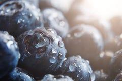 r 夏天,春天概念 在柔和的光芒的成熟和水多的新鲜的被采摘的蓝莓特写镜头  库存图片