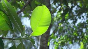 r 普拉兰岛 关闭生长离开热带的树或的灌木在一个异乎寻常的海岛在印度洋 影视素材